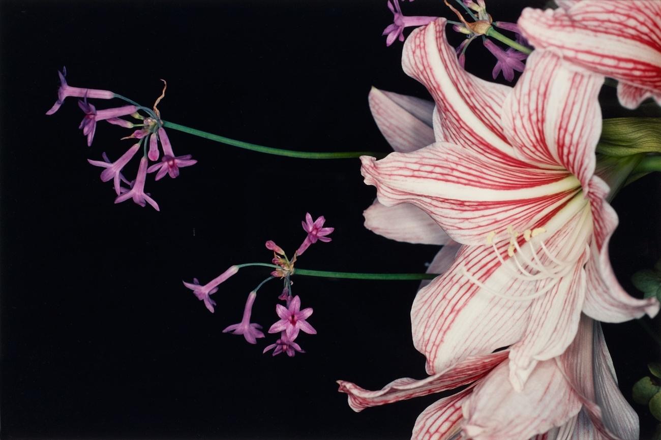 araki-flower1