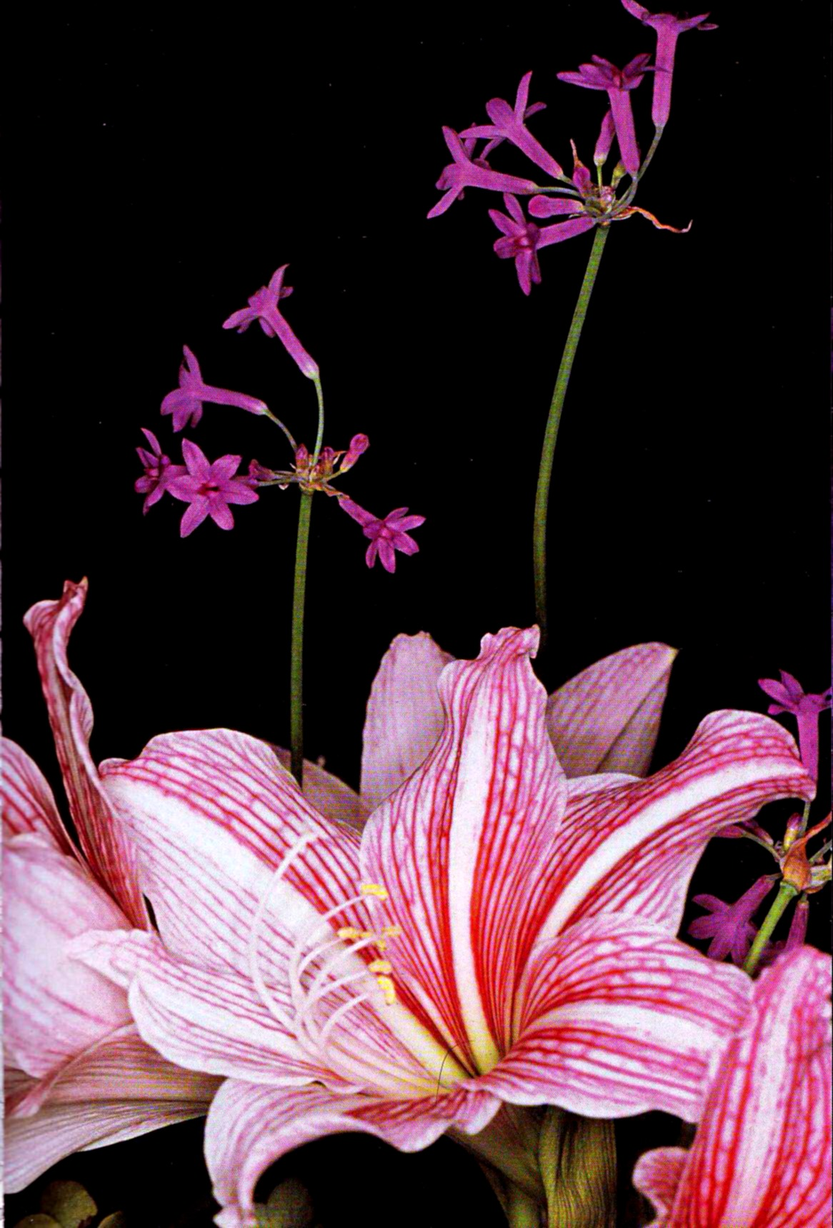flower-photography-nobuyoshi-araki-untitled-from-flowers-1990