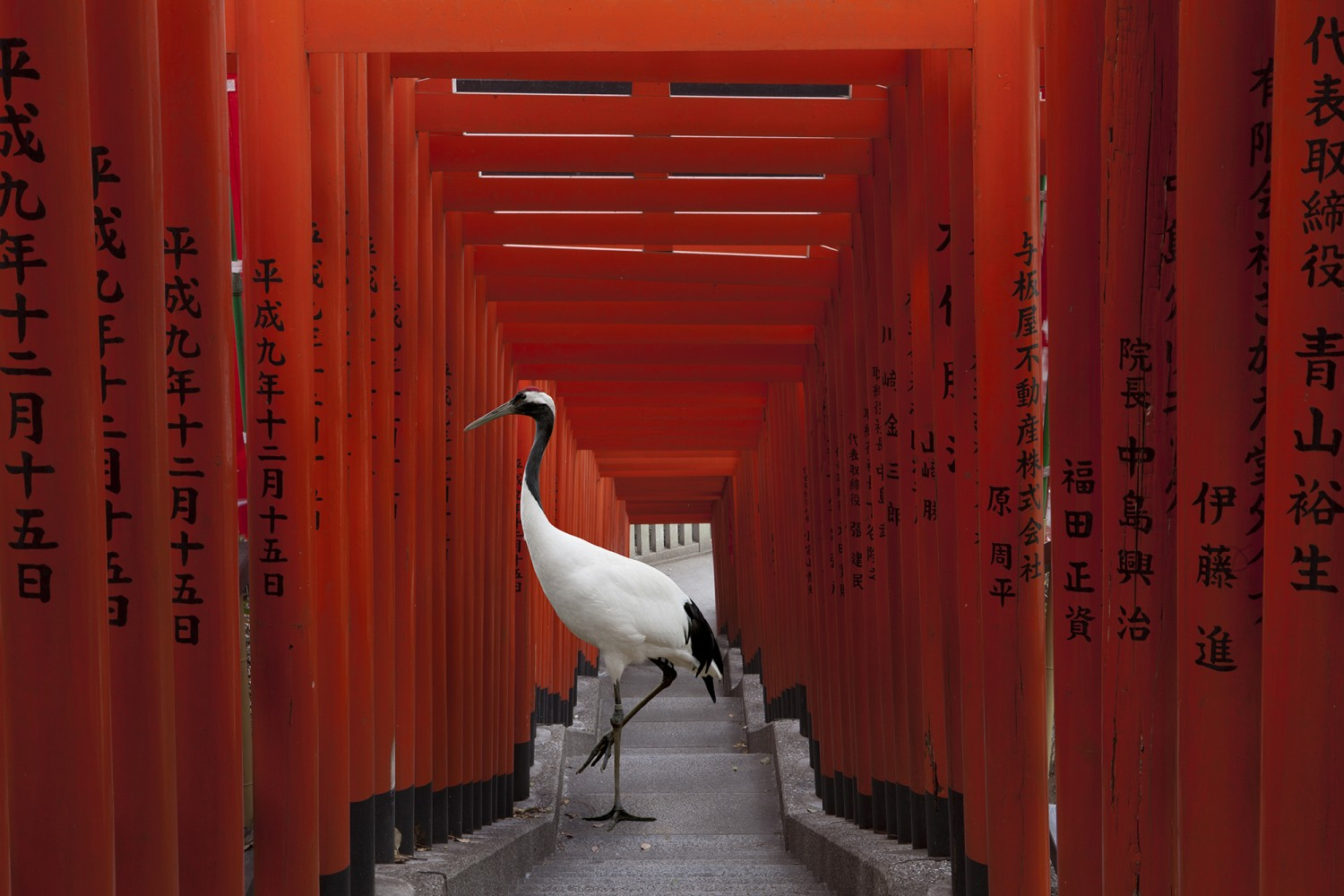 karen-knorr-Hei-Tori-brighter-eye
