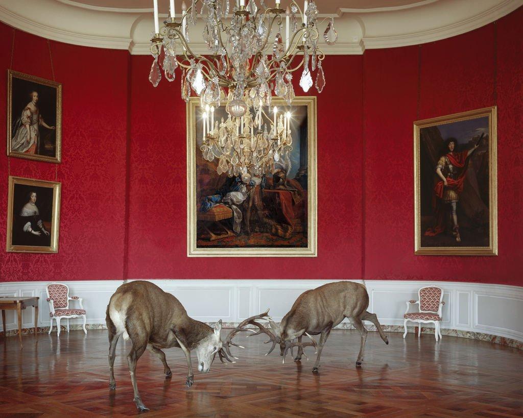 karen-knorr-animaux-palace-04