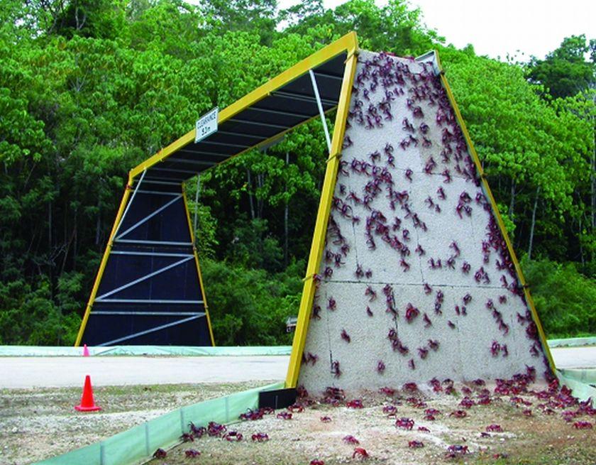Pont pour crabes en Australie, sur l'ile de Christmas