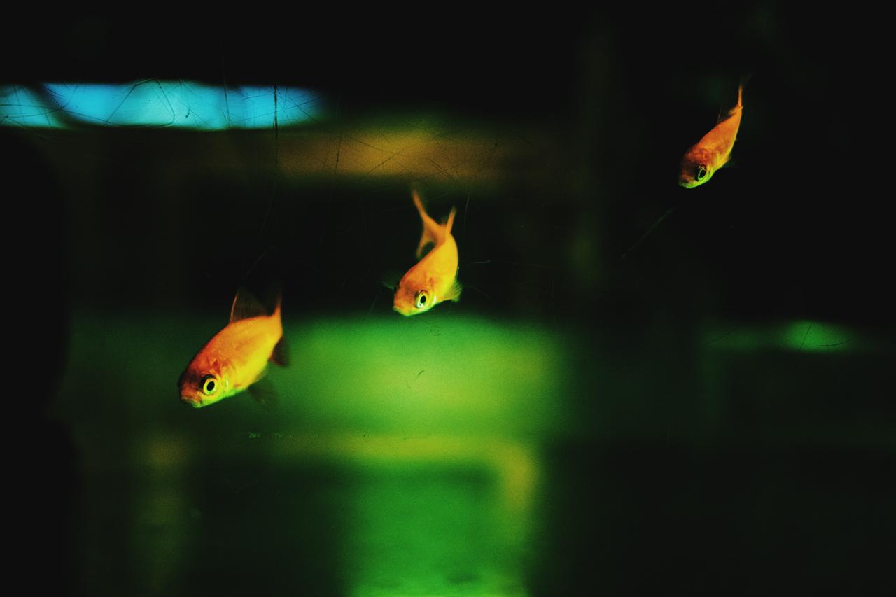 AIZAWA YOSHIKAZU-fish